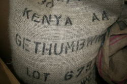 ケニア ゲゼンブイニ農園